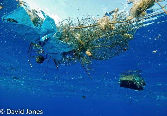 Plastic-pollution-in-ocenas-3-CREDIT-DAVID-JONES.jpg