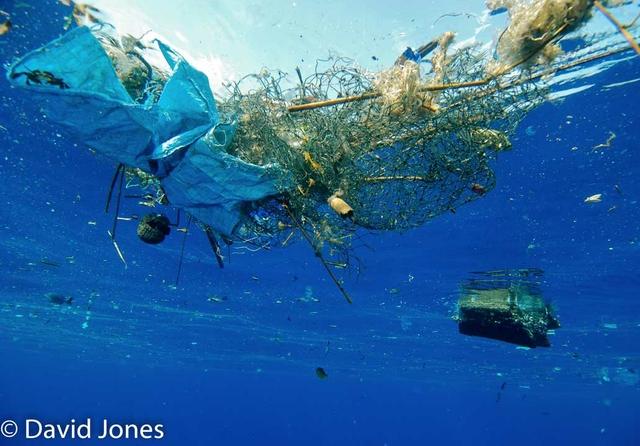 Plastic-pollution-in-ocenas-3-CREDIT-DAVID-JONES.jpg