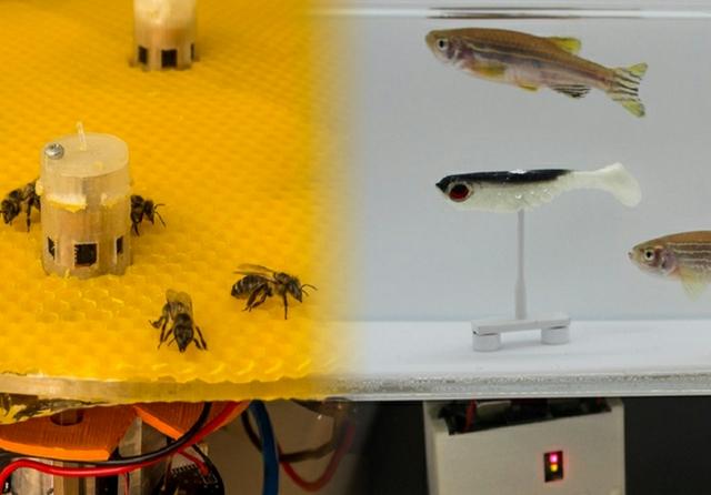 bees and fish.jpg
