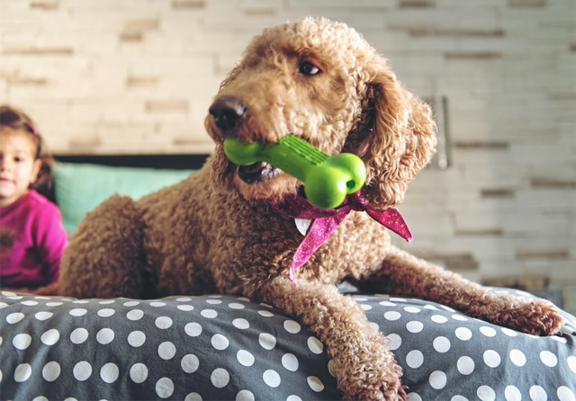 KRAIBURG Thermolast dog toy