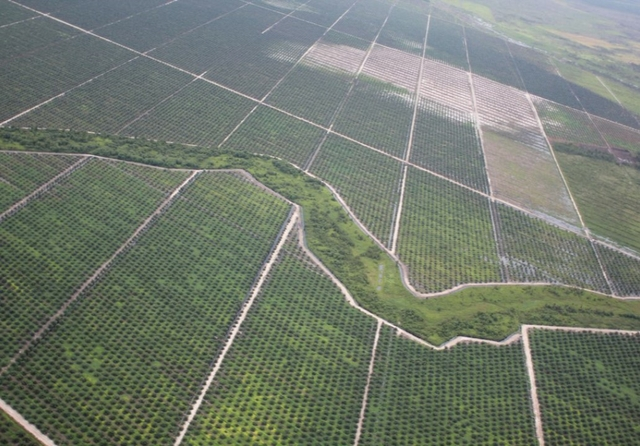 Indonesia palm oil plantation