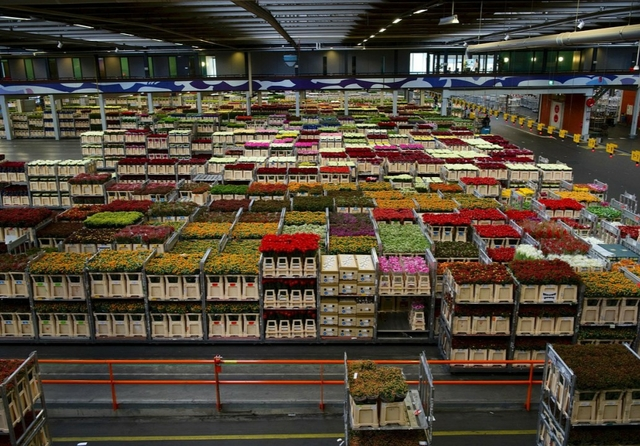 Netherlands flower warehouse