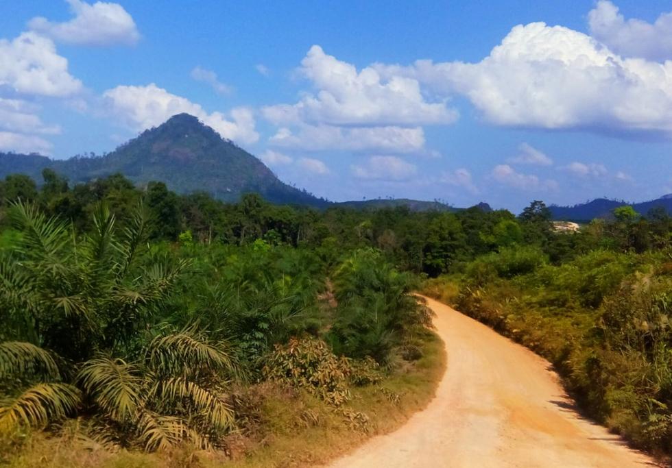 Oil palm plantation Indonesia