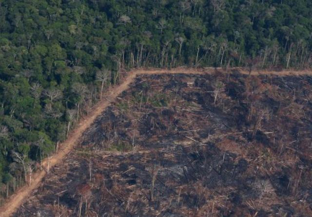 amazon deforestation.png