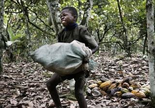Child labour on cocoa plantation