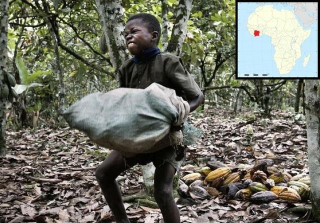 Child labour on a cocoa plantation, Côte d'Ivoire