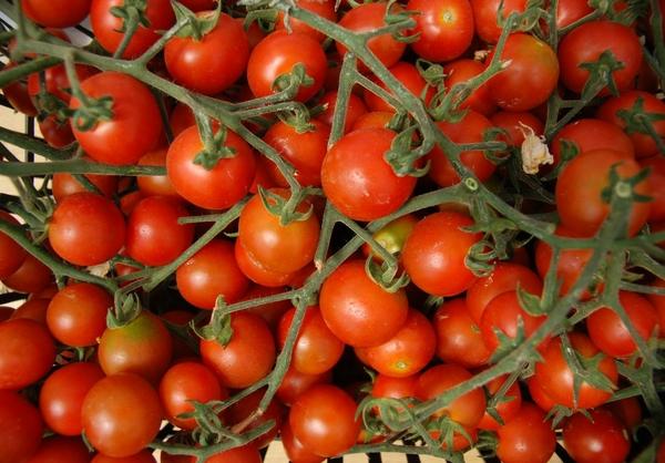 Organic Farming, Kampia Cyprus. Source: George M. Groutas / Flickr