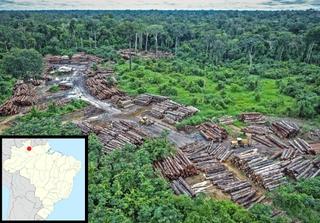Illegal logging on Pirititi indigenous Amazon land. Source: quapan / Flickr