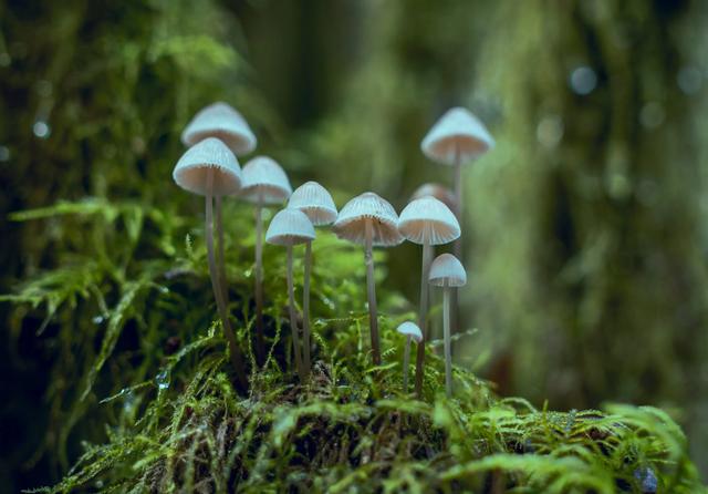 Mushrooms. Credit: Visually Us / Pexels