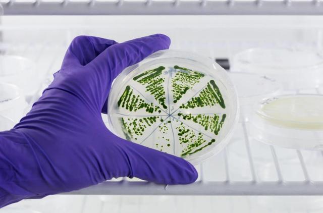 Totalenergies - microalgae-based biofuels project. Credit: Totalenergies
