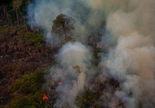 Recent burned and deforested area within Jamanxim National Forest. Amazon Rainforest - Pará / Brazil. Photo: marcio isensee / Shutterstock